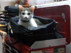 Kitty Button exploring my tool bag