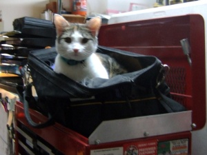 Kitty Button exploring my tool bag